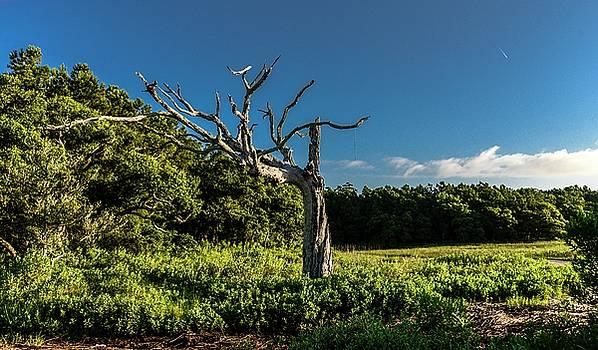 Marsh Landscape by Bill Hosford