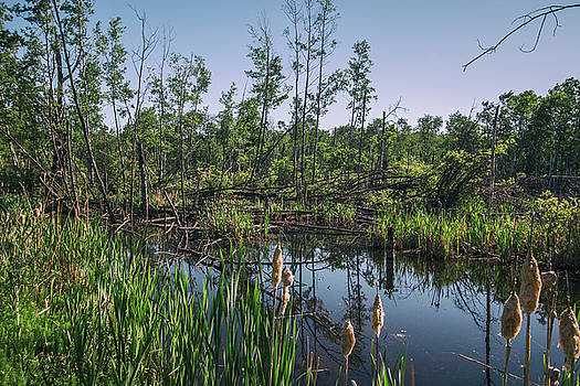 Marsh by Melanie Janzen