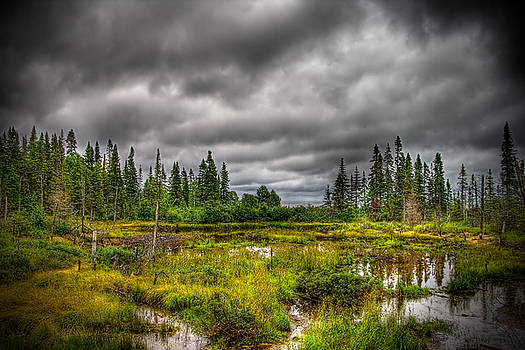 Marsh near the Lake by Michel Filion