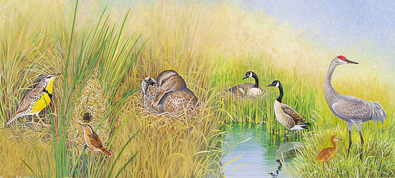 Marsh Nests by Shari Erickson
