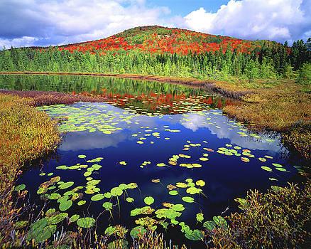 Marsh Pond by Frank Houck