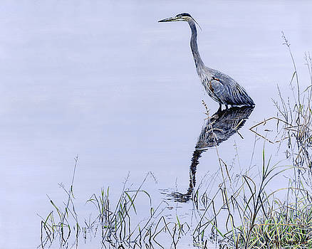 Marsh Reflections - Great Blue Heron by Craig Carlson