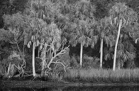 Bill Chambers - Marsh Scene - Yankeetown, FL