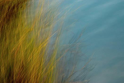 Marsh Sweep by Nicole Robinson