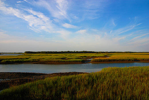 Susanne Van Hulst - Marshland Charleston South Carolina