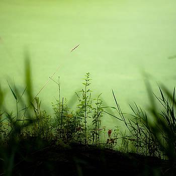 Marshland Grasses 008 by Noah Weiner
