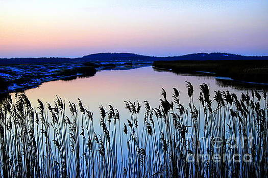 Marshy Twilight by Hanni Stoklosa
