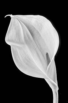 Marvelous Calla Lily In Black And White by Garry Gay