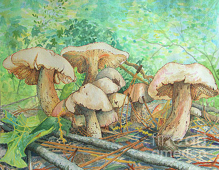 Marvelous Mushrooms Hidden in Gibbs Gardens by Nicole Angell
