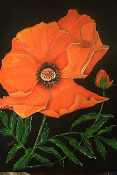 Mary Pat's Poppy by Sue Ervin