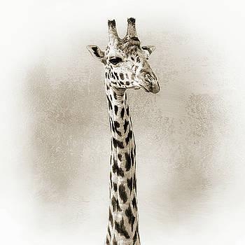 Susan Schmitz - Masai Giraffe Closeup Square Sepia
