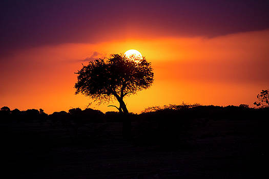 Masai Mara Sunrise by David Morefield