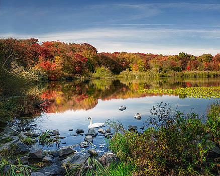 Massapequa Lake and a Swan by Vicki Jauron