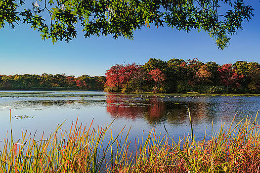 Massapequa Nature Preserve by Jose Oquendo