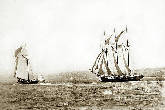California Views Mr Pat Hathaway Archives - Master mariners Regatta,  racing sail boats   William L. Oliver,  1884
