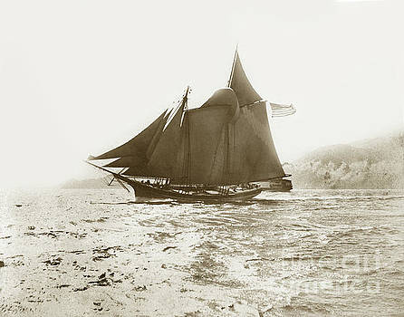California Views Mr Pat Hathaway Archives - Master mariners Regatta San Francisco Bay sail boats race  July 4, 1884