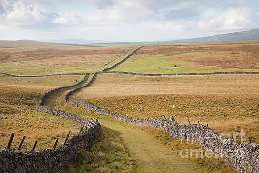 Mastiles Lane on Kilnsey Moor, landscape by Gavin Dronfield