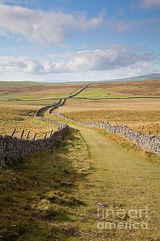 Mastiles Lane on Kilnsey Moor, portrait by Gavin Dronfield