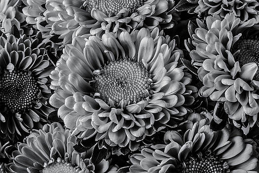 Matsumoto Flowers In Black And White by Garry Gay