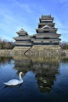 Matsumoto Swan by Kuni Photography