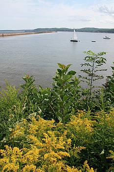 Mattson Harbor by Dylan Punke