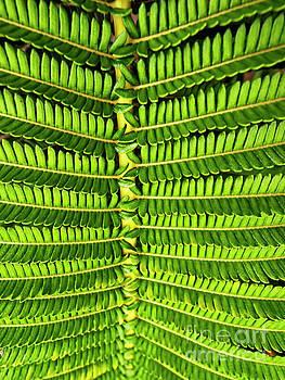 Maui Fern Garden by Tom Jelen