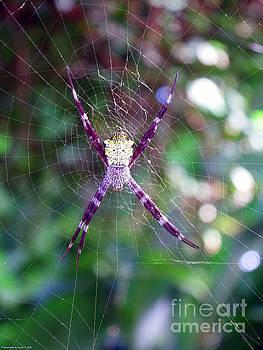 Gena Weiser - Maui Orbweaver/Garden Spider
