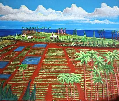 Maui Taro Fields by Bob Hasbrook