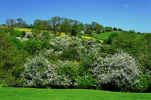 May Blossom near Thorpe in Derbyshire by Rod Johnson