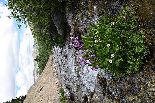 May Flower Gulch Stream  by Erin Clausen