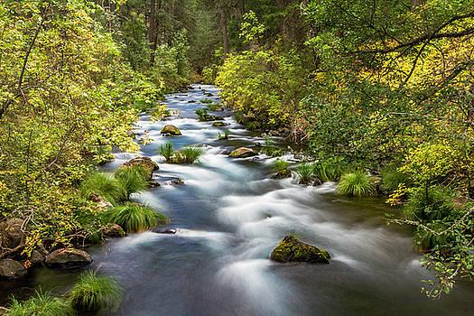 McArthur-Burney Falls Creek by Bill Gallagher