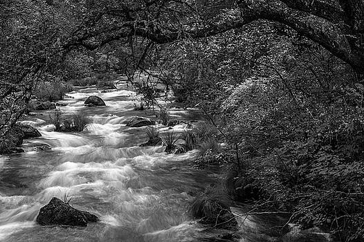 McArthur-Burney Falls Creek Black and White by Bill Gallagher