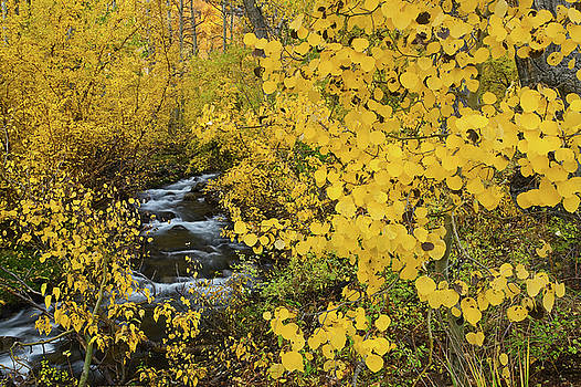 McGee Creek Fall Color by Nolan Nitschke