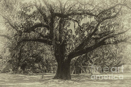 McLeod Plantation Majestic Oak by Dale Powell