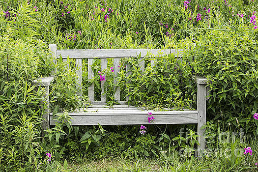 Bench In The Meadow by Denise Woldring