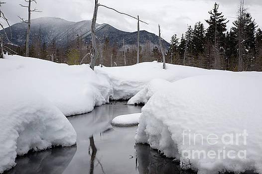 Erin Paul Donovan - Meadow Brook - White Mountains New Hampshire