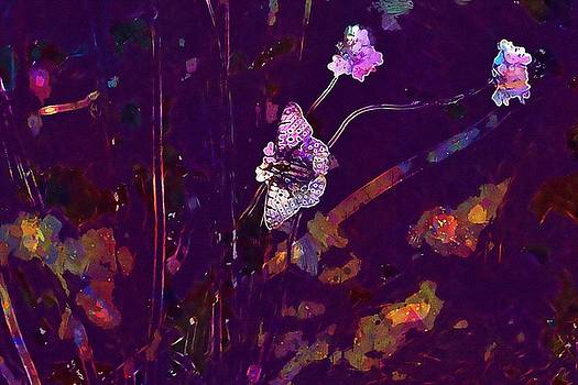 Meadow Butterfly Flowers Close  by PixBreak Art