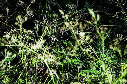 Meadow by Christoph Mueller