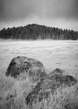 Meadow Meditation by Alexander Kunz