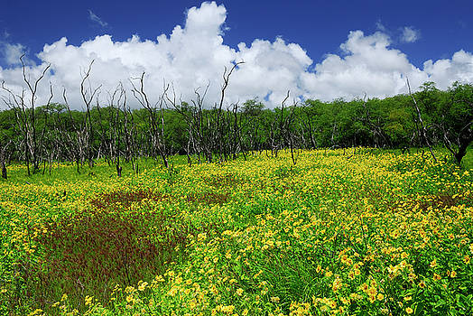 Reimar Gaertner - Meadow of yellow Wedelia flowers and dead tree trunks Molokai