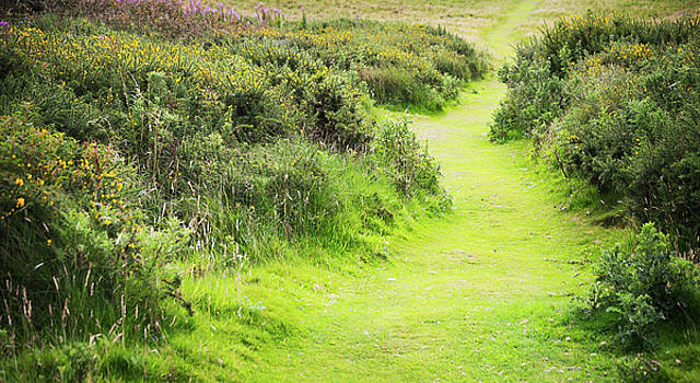 Svetlana Sewell - Meadow Path