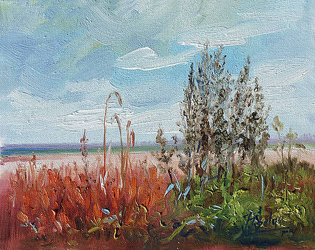 Meadow weeds by Irek Szelag