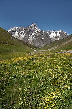 Aivar Mikko - Meadow with Flowers from Le Saxe-Rifugio Bertone-Lavachey Trek