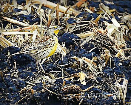 Meadowlark by Kathy M Krause