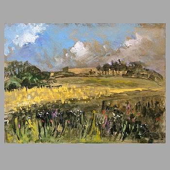 Meadows by Ilona Filip