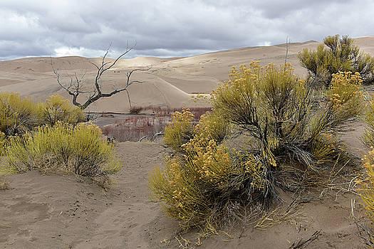 Medano Creek at the Dunes by Jeffrey Hamilton