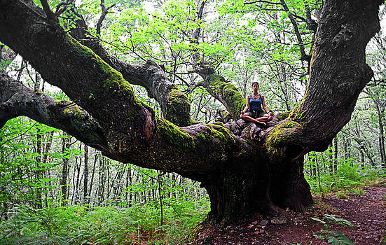 Meditation on centenary tree  by Nano Calvo