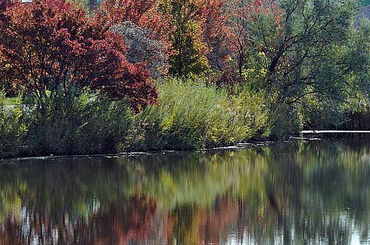 Meditations of Autumn by D Nigon