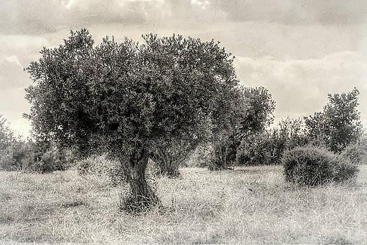 Mediterranean landscape #2 by Ignacio Leal Orozco