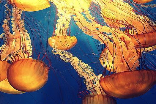 Meduse by Vincent Marguerit